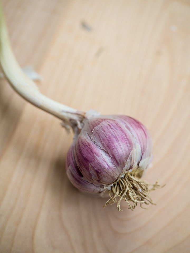 Hardneck garlic with deep purple and a long dried scape