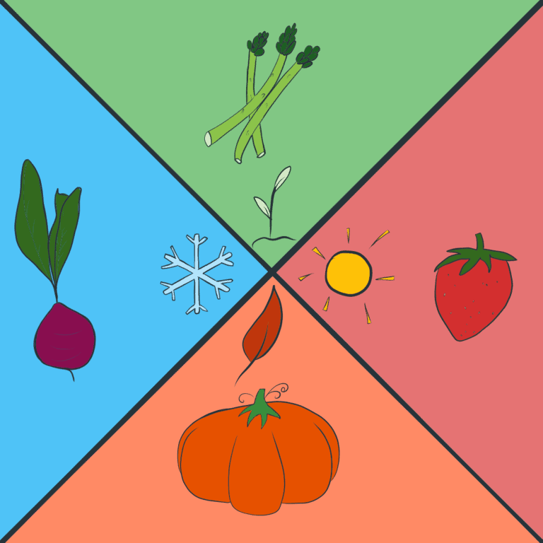 Illustration of 4 seasons with vegetables and fruits
