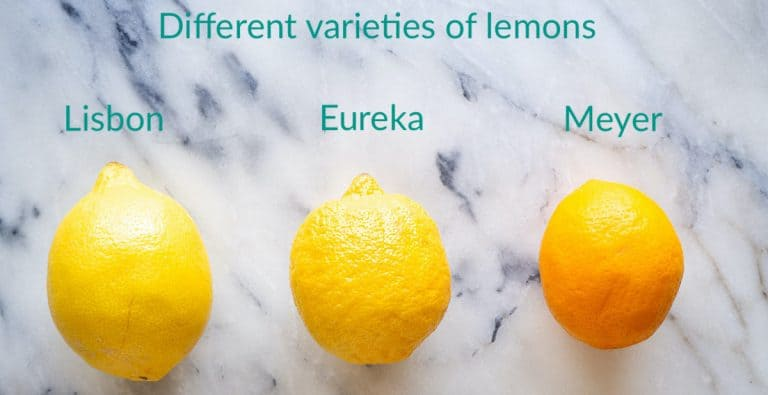 3 different varieties of lemon (Lisbon, Eureka, Meyer) compared side-by-side