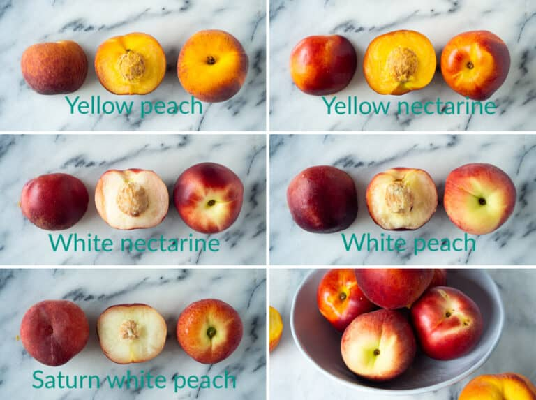 5 different varieties of peaches compared side-by-side