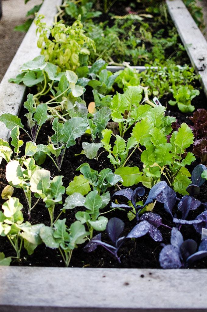 Why Start A Community Garden