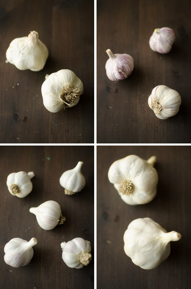 4 by 4 grid of 4 Different Garlic Varieties comparing whole bulbs