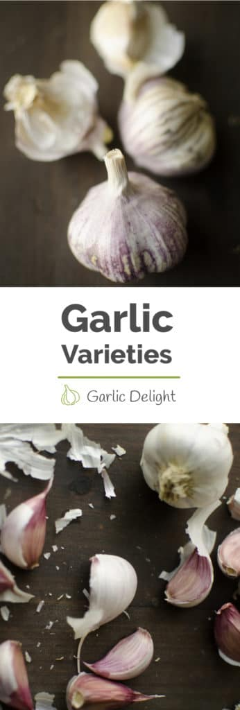 Garlic Varieties And Which We Are Growing In 2017 -- There are hundreds of different garlic varieties. Learn fun facts about different types of garlic and which ones we are planting in our balcony garden. -- Stories from garlicdelight.com.
