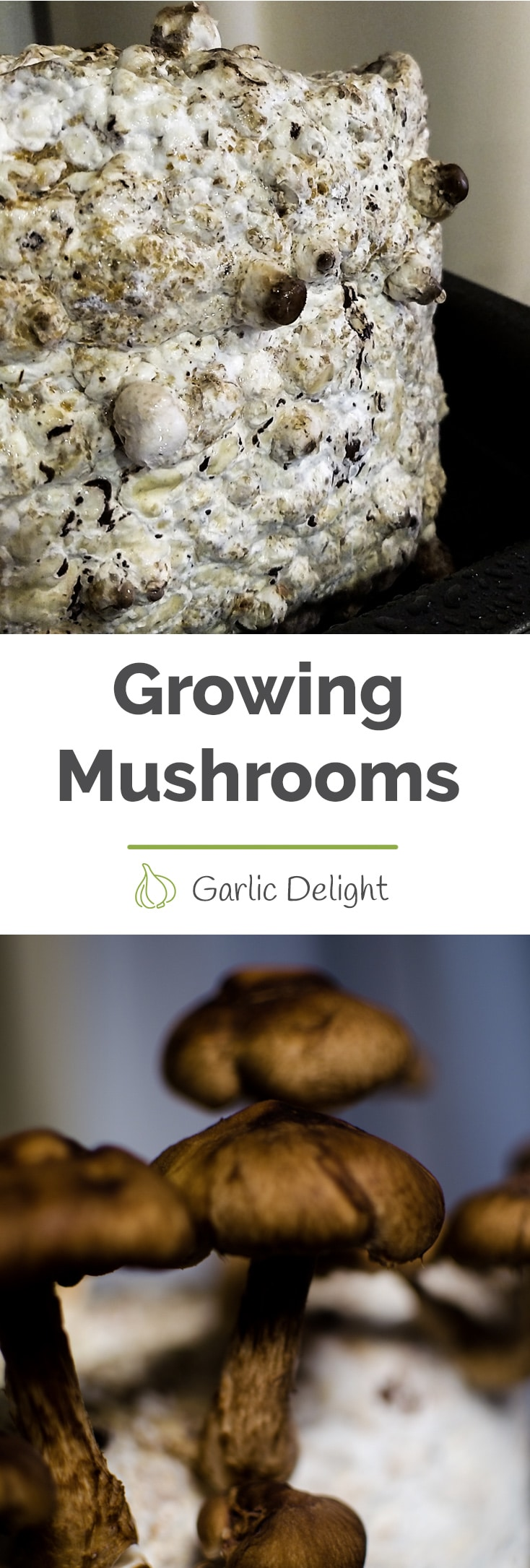 Growing our Shiitake Mushrooms -- An ode to our creepy mushrooms. Learn how surprising and weird it has been to grow mushrooms, care for them, and then eat them. Stories from garlicdelight.com.