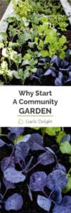Why Start A Community Garden -- Growing food with your neighbors in a community garden is full of surprises. Lessons learned in our first year gardening. | garlicdelight.com