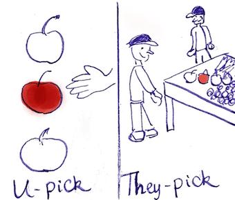 u-pick versus they-pick cartoon